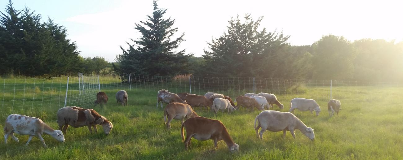 Home - Nemaha Hill Farm